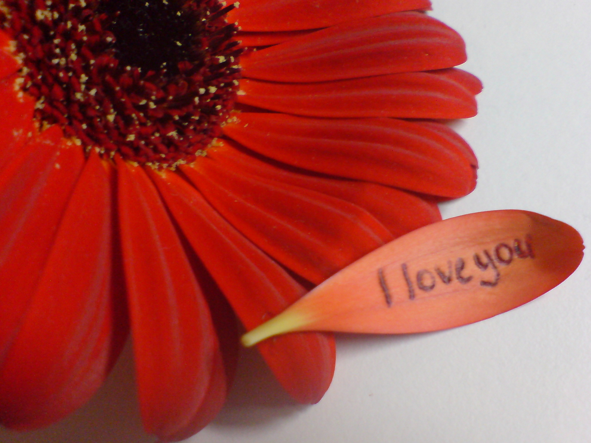 red_flower___i_love_you_by_arttwins.jpg