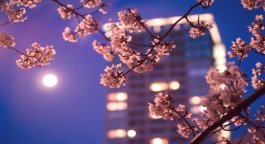 tokyo-night-spring-wallpapers-t